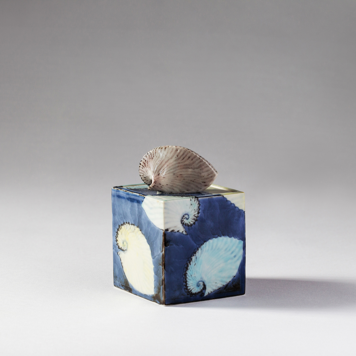 Argonaut box ( Kensuke Fujiyoshi )